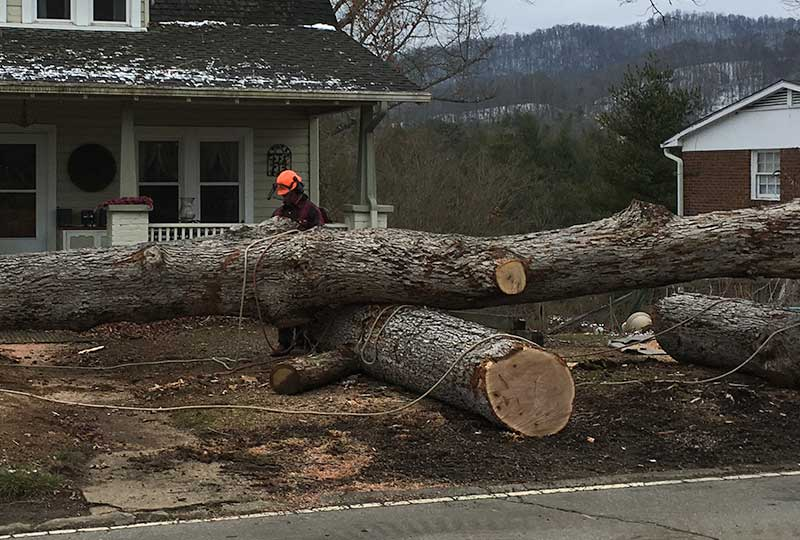 Tree Removal at home in Weaverville