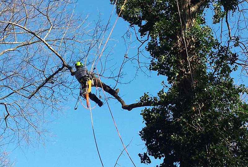 Comprehensive tree pruning