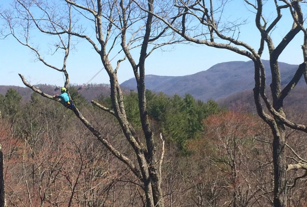 Pruning Trees in Fairview, NC