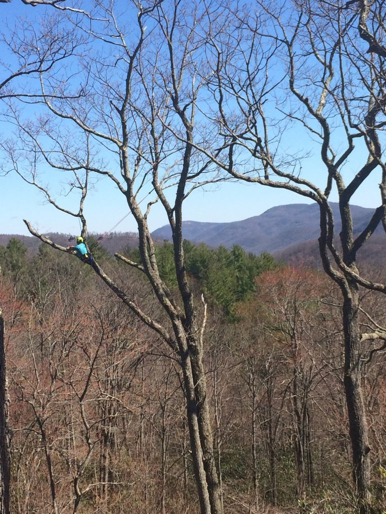 Vista Pruning in Fairview, NC