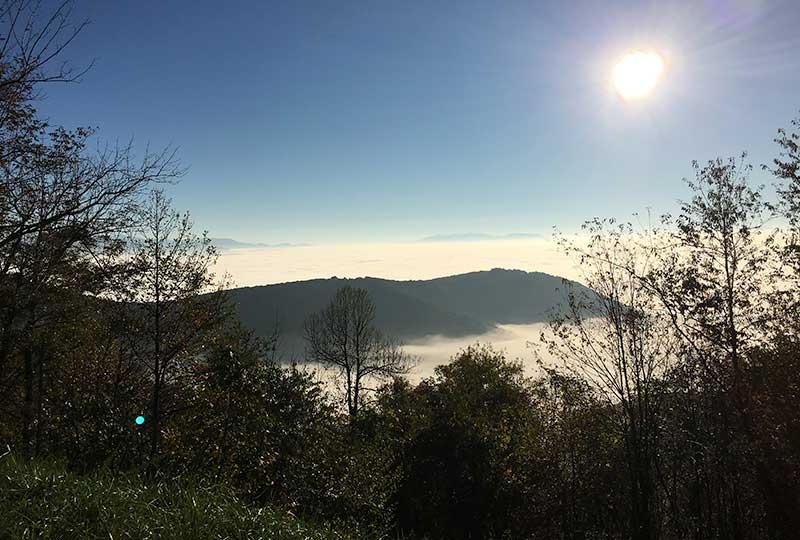 Vista Clearing