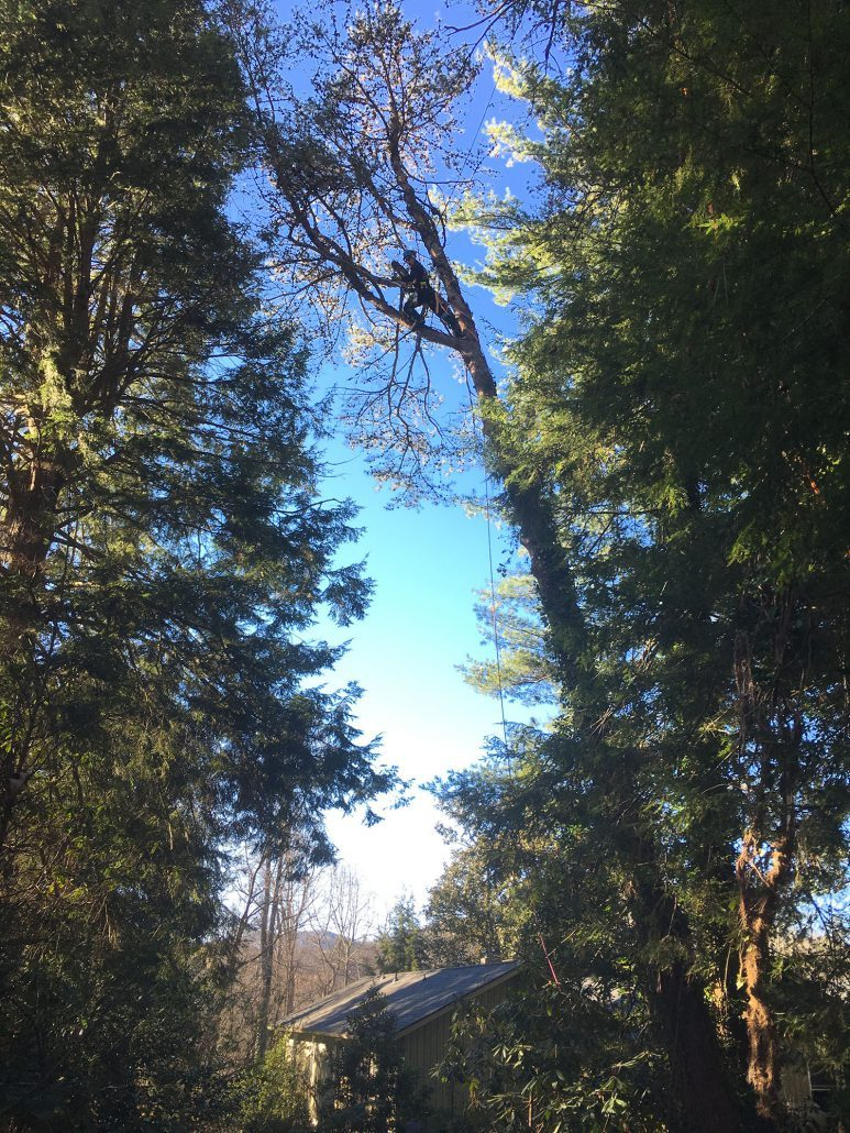 Careful planning of tree pruning and large branch removal above home near Fairview, NC