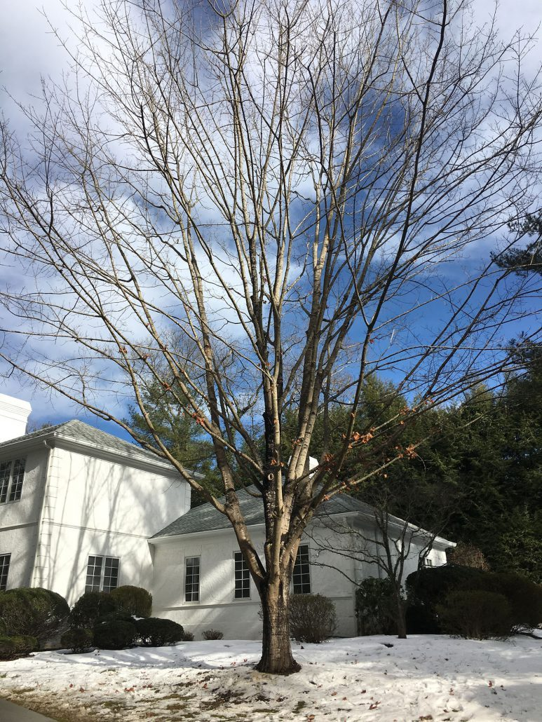 Professional arborists for home site planning