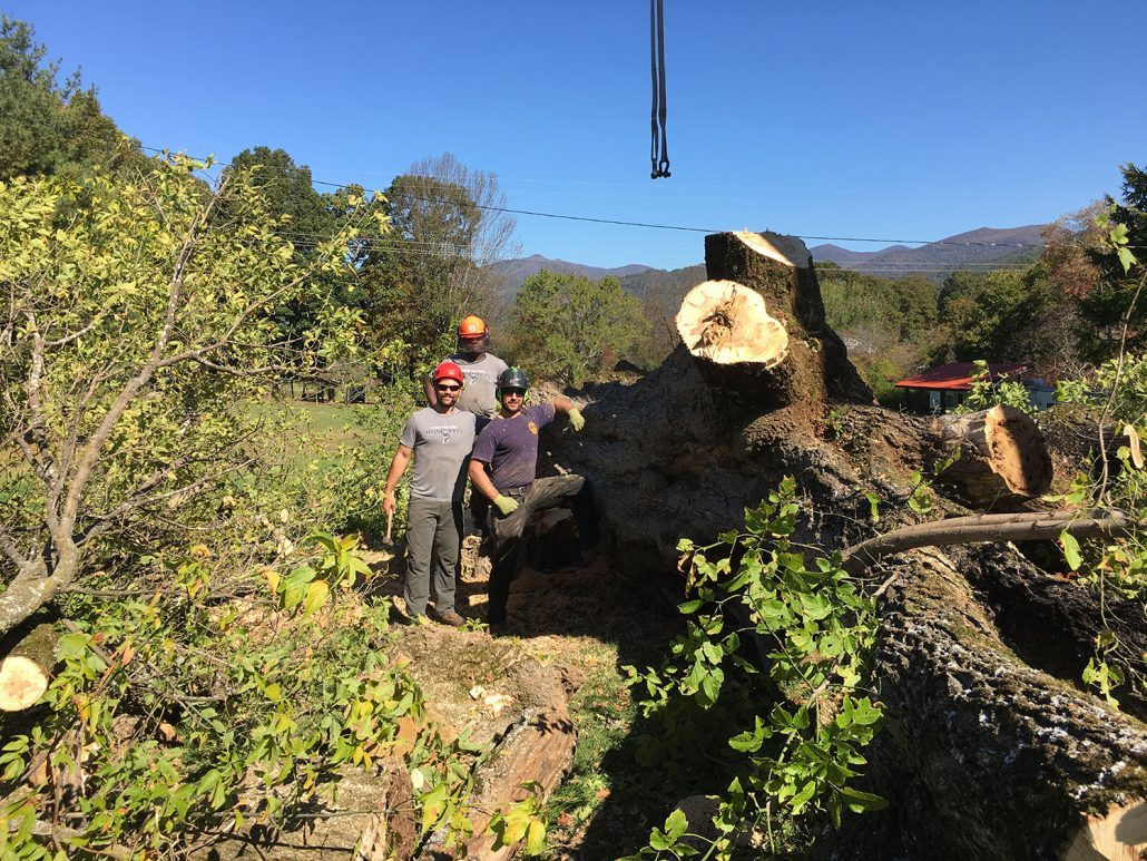 Carolina Tree Monkeys provides comprehensive tree service
