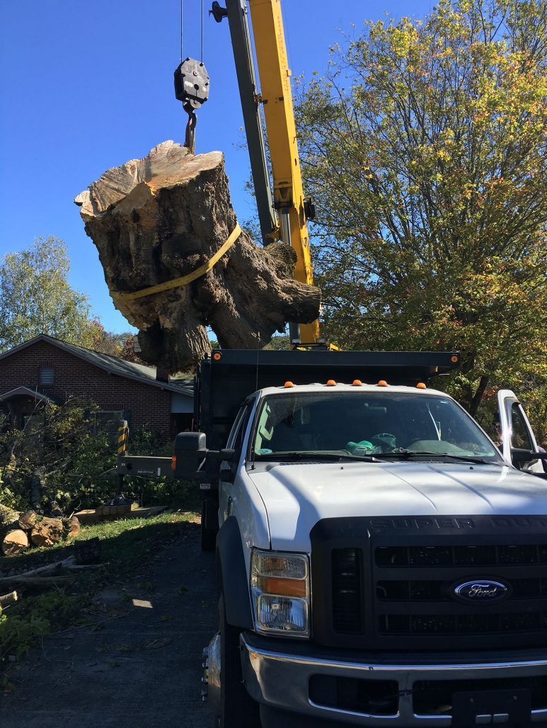 removing large stump